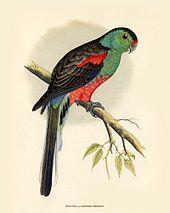 Paradise Parrot, Australia ( extinct)