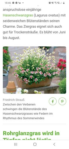 Plants, Bunny Tail, Lawn And Garden, Plant, Planets