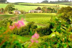 Furleigh Estate Vineyards in Dorset, England.