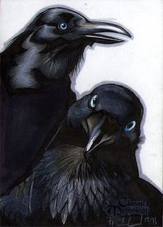 """In Norse mythology, Huginn (from Old Norse """"thought"""") and Muninn (Old Norse """"memory"""" or """"mind"""") are a pair of ravens that fly all over the world, Midgard, and bring the god, Odin information. Norse Pagan, Old Norse, Norse Mythology, Iron Age, Quoth The Raven, Raven Art, Jackdaw, Crows Ravens, Tattoo Motive"""