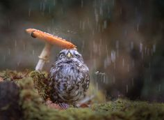 Raindrops by Tanja Brandt on 500px