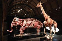 LONDON NATURAL HISTORY MUSEUM like the bodies exhibit with animals!