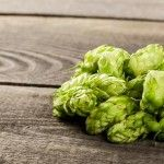 For many styles of beer, dry hopping is essential to truly capture the true flavors & aroma of your hops. Learn more about dry-hopping while brewing. Make Beer At Home, Make Your Own Wine, Brew Your Own, How To Make Beer, Brewing Recipes, Homebrew Recipes, Beer Recipes, Hops Plant, Ale Recipe