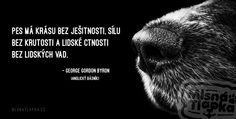 Citát Byron Psy, Dog Quotes, Humor, Dogs, Cute, Movie Posters, Quotes For Dogs, Humour, Pet Dogs