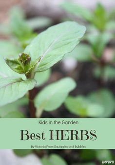 Kids Gardening; Best Herbs