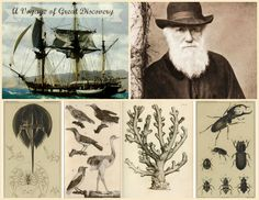 The entire library of illustrations, journal entries, and research notes of Charles Darwin has been identified and digitally archived! And it's FREE! http://darwin-online.org.uk/BeagleLibrary/Beagle_Library_Introduction.htm
