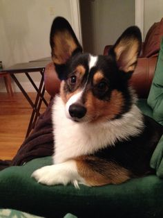 I think it's time we had a serious talk about only getting fed twice a day. Bow Wow, Pembroke Welsh Corgi, Animal Faces, Cute Creatures, Corgis, Little Dogs, Cute Puppies, Addiction, Kitty