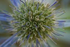 Blue Flower 13x19 Wide Print $20.00