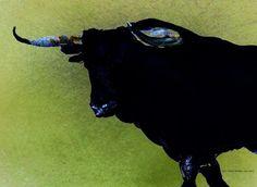 'Toro green 1' von April Turner bei artflakes.com als Poster oder Kunstdruck $27.72