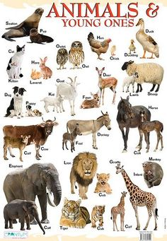 young ones of animals - Video Search Learn English Kid, Learning English For Kids, English Lessons For Kids, English Language Learning, Teaching English, English Adjectives, English Vocabulary, English Grammar, English Writing