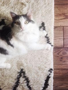 cat, West Elm, Kasbah Wool Rug, Jessica Howell, office decoration, kitty