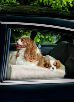 Let your pet travel in first-class luxury!