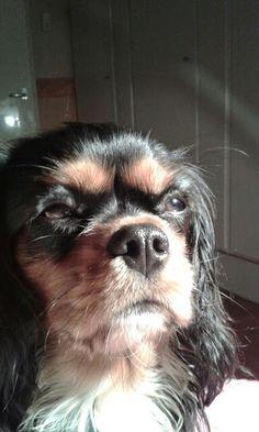Mijn hondje bella