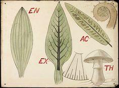 Christopher Dresser  Botanical Diagram  1855