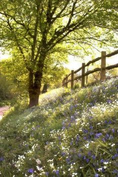 country meadow/// I spent many days as a child in the woods picking wild flowers. Beautiful World, Beautiful Places, Beautiful Pictures, Beautiful Forest, Beautiful Flowers, Country Life, Country Living, Country Roads, Country Fences