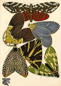 VINTAGE INSECT ILLUSTRATIONS BY E.A. SÉGUY E.A. Séguy is a somewhat mysterious artist, working in France in the early 1900s. From BibliOdyss...