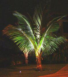 Veja dicas para planejar a iluminação do jardim da sua casa