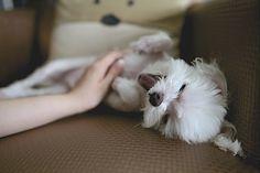 Blogi  OMAISAPU.fi      : Koira pidentää elinikääsi