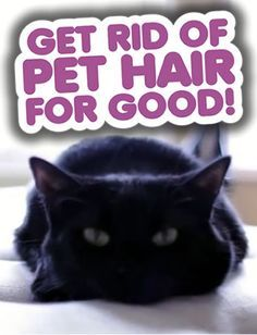 Get Rid of Pet Hair for good! How to remove pet hair from laundry (AMAZING tip), furniture and floors.