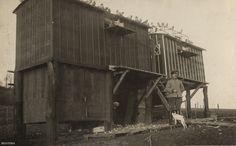 Egy német postagalamb-központ a nyugati fronton, valamikor 1916-ban. Az első világháborúban a postagalambok számítottak az üzenetküldés egyik legbiztosabb módjának. A harctéren alkalmazott 100 ezer galamb 95 százalékban volt sikeres. Olyan gyorsan repültek, hogy puskával szinte lehetetlen volt őket lelőni, így az ellenség betanított ragadozó madarakat használt ellenük.