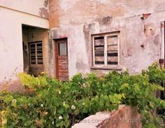 está na Rua dos Naturais, S. Pedro de Moel....Já f Natural, Plants, Garden, Family Homes, Street, Fotografia, Garten, Planters, Gardening
