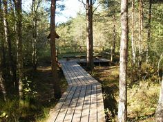Pääsküla Bog  Nature trails starting at the end of Hiiu street boast of the flora and fauna of the bog, viewing tower and countless ponds or streams.  Nõmme, Tallinn, Estonia