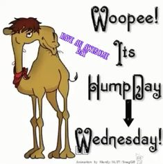 Woopee It's Hump Day Wednesday days days of the week good morning wednesday hump day graphic hump day camel happy wednesday good morning wednesday wednesday quote Wednesday Greetings, Wednesday Hump Day, Happy Wednesday Quotes, Good Morning Wednesday, Wednesday Humor, Wonderful Wednesday, Good Morning Greetings, Friday Humor, Blessed Wednesday