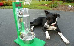 Faça Você Mesmo um Bebedouro Automático para Cães e Gatos