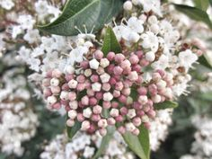 Blossom. Sicilian spring.
