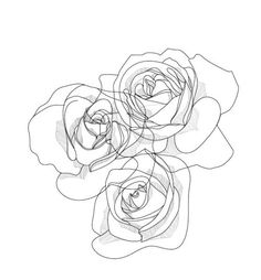 Rose Drawing line drawing Easy Flower Drawings, Easy Drawings, Drawing Flowers, Line Drawing Tattoos, Tattoo Drawings, Illustration Rose, Illustration Essay, Digital Illustration, Contour Drawing