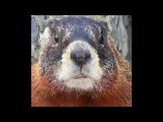 Souhait Humoristique - Retraite - Marmotte Chiante - Ep.02  Un souhait original !!!  #maitrefun #marmotte #chiante #marmottechiante #vulgaire #humour #drole #comique