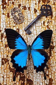 Butterfly and Key