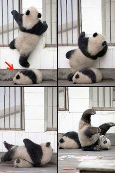 El profundo sueño de un panda.