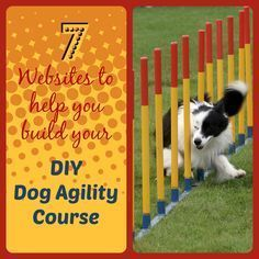 Want something fun to do with your dog...Agility is a great way to bond with your dog and for him to get exercise as well. Follow us https://thefourleggedkingandi.wordpress.com/2015/01/16/diy-dog-agility-course/