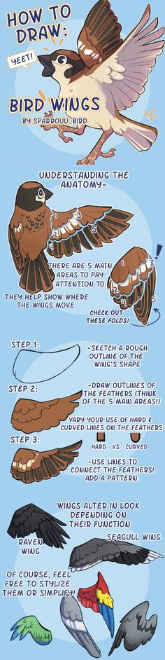 "drawingden: "" How to Draw Bird Wings by SPARROUU Support the artist on Redbubble! "" https://www.deviantart.com/sparrouu"