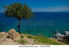 tree near water