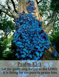 Psalm 33:1 (KJV)... | Rejoice in the LORD, O ye righteous: for praise is comely for the upright........Flickr - Photo Sharing!