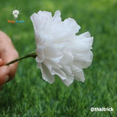 Toilet Paper Flowers, Tissue Paper Flowers Easy, Tissue Paper Crafts, Paper Flowers Craft, Paper Flower Tutorial, Flowers With Paper, Paper Flower Bouquets, How To Make Flowers Out Of Paper, Tissue Paper Decorations