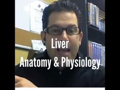 Liver - Anatomy and Physiology - YouTube