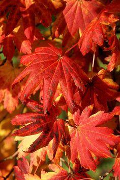 ༺♥༻ Autumn Leaves ༺♥༻