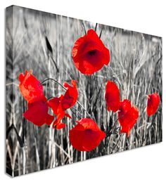 Poppy Red Black & White Flower - Canvas Wall Art Pictures For Home Interiors