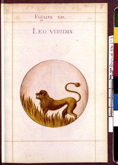 Figura VII - Leo viridis département - Sapientia veterum philosophorum, sive doctrina eorumdem de summa et universali medicina 40 hierogliphis explicata