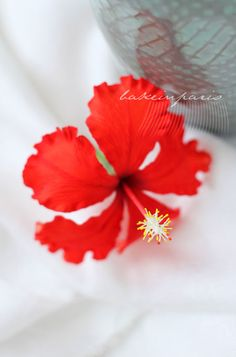 Hibiscus Flower  by Bake in Paris.   There's a link in their blog to Alyson Reynolds and her book about making flowers in sugar or cold porcelain .....have to order it!!