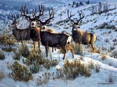 Artist Cynthie Fisher Whitetail Deer Buck Art Print Members Only Mule Deer Buck, Mule Deer Hunting, Hunting Art, Hunting Rooms, Archery Hunting, Wildlife Paintings, Wildlife Art, Deer Pictures, Animal Pictures