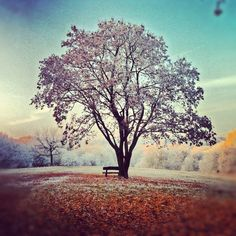A tree and a bench..