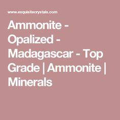 Ammonite - Opalized - Madagascar - Top Grade  | Ammonite | Minerals