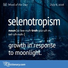 Today's Word of the Day is selenotropism. Learn its definition, pronunciation, etymology and more. Join over 19 million fans who boost their vocabulary every day. Unusual Words, Weird Words, Rare Words, Big Words, Words To Use, Unique Words, Great Words, More Than Words, Word Nerd