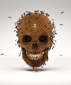 Skull Hive by Luke Dwyer, via Behance
