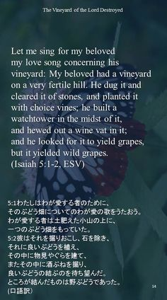 Let me sing for my belovedmy love song concerning his vineyard: My beloved had a vineyard on a very fertile hill. He dug it and cleared it of stones, and planted it with choice vines; he built a watchtower in the midst of it,and hewed out a wine vat in it;and he looked for it to yield grapes, but it yielded wild grapes.(Isaiah 5:1-2, ESV)5:1わたしはわが愛する者のために、 そのぶどう畑についてのわが愛の歌をうたおう。 わが愛する者は土肥えた小山の上に、 一つのぶどう畑をもっていた。 5:2彼はそれを掘りおこし、石を除き、 それに良いぶどうを植え、 その中に物見やぐらを建て、 またその中に酒ぶねを掘り、 良いぶどうの結ぶのを待ち望んだ。…