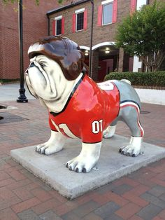 Athens Bulldog statue on the campus of the University of Georgia in Athens Georgia. Nothing like the Uga mascot, the best in the SEC. Georgia Bulldogs Football, Sick, Bulldog Mascot, Athens Georgia, Georgia Girls, Football Uniforms, University Of Georgia, Dog Toys, Thing 1